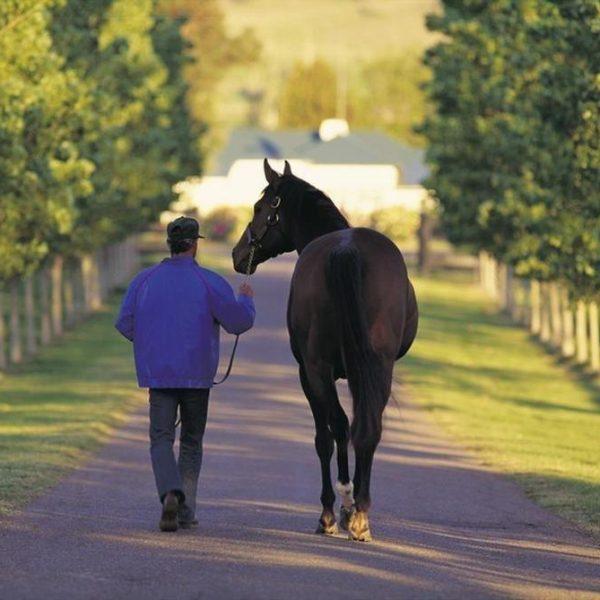 Scone Horse Capital of Australia