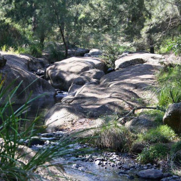 National Park - Barrington Top