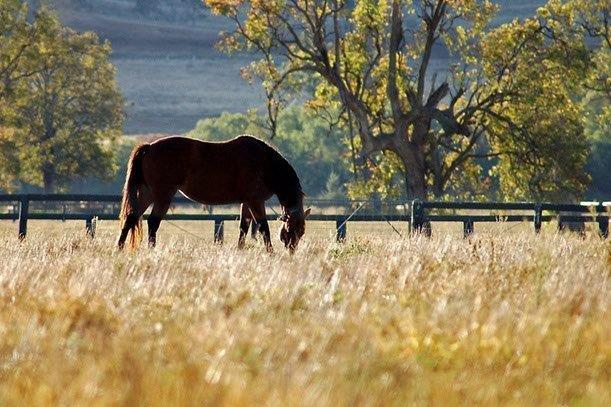 "Scone ""Horse Capital of Australia"" - Highway Caravan Park Scone"